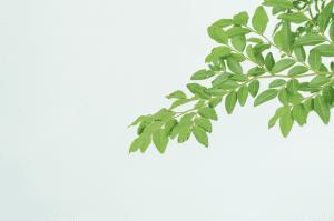 фитохимикали растителни субстанции